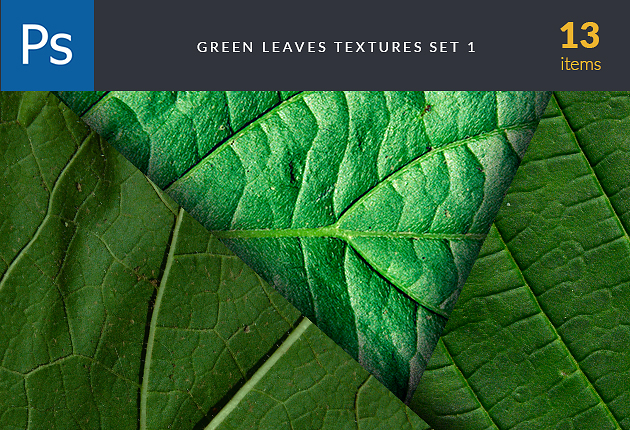 textures-green-leaves-set