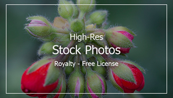 Stock Photos with Extended License