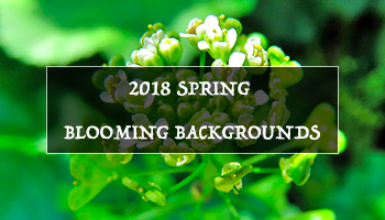 2018 Spring Blooming 9K+ Backgrounds